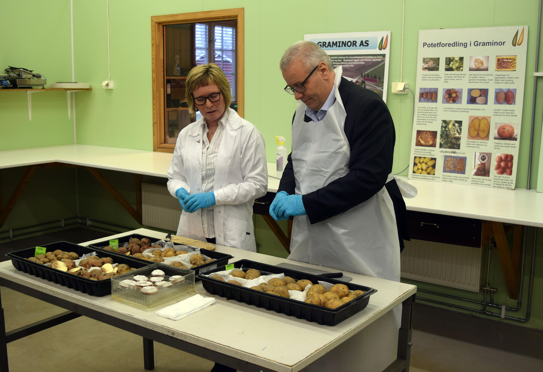 Forsøkstekniker Anja Haneberg og minister Bård Hoksrud kontrollerer poteter.
